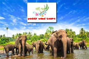 Paddy Wind tours
